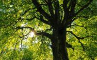 Säker och effektiv trädvård